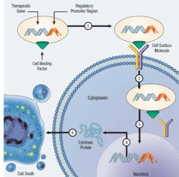 An Introduction To Cancer Gene Therapy