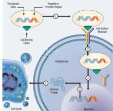 Cancer Gene Therapy